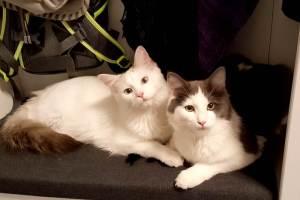 Katzenerziehung-Purina-Katzen erziehen