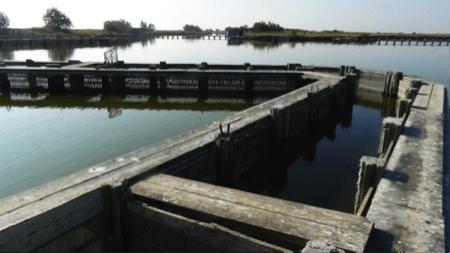 spec Comacchio-4-pesca 2