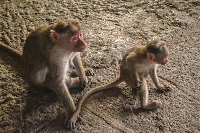 Monkeys at Virupaksha Temple of Hampi | Stories by Soumya