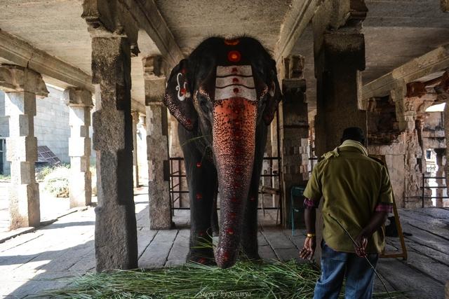 Elephant at Virupaksha Temple of Hampi | Stories by Soumya