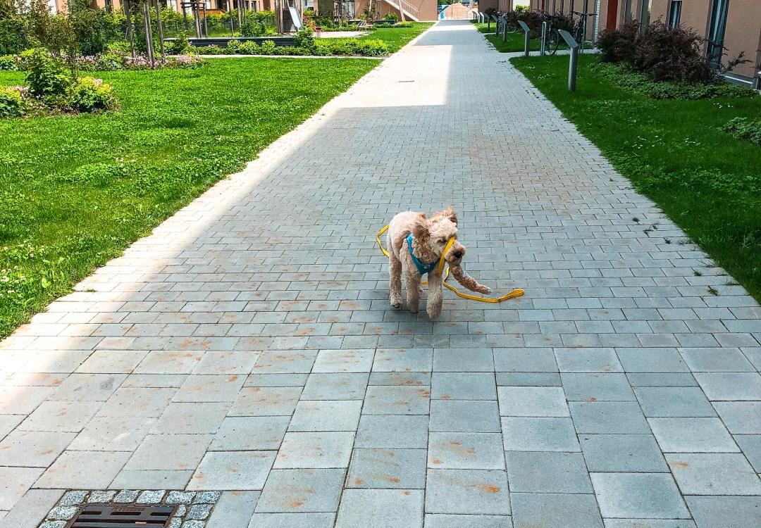 Konsequenz in der Hundeerziehung