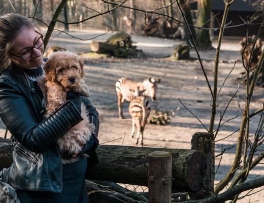 Anschaffungskosten für einen Hund