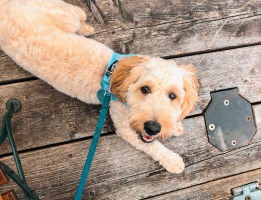 Packliste-für-Urlaub-mit-Hund