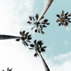 palm-trees-turquoise