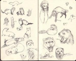 ferret sketches