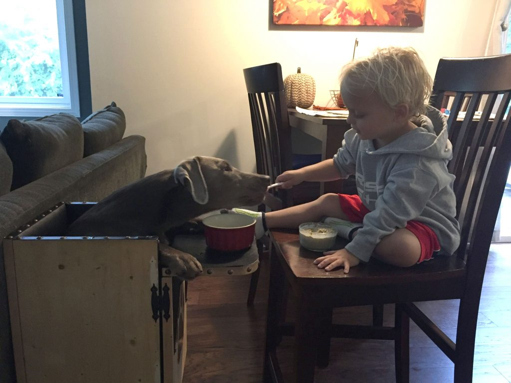 dog high chair graco born with rare condition forced to eat dinner in a