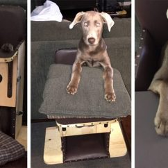 Dog High Chair Lift For Sale Born With Rare Condition Forced To Eat Dinner In A And Be Burped After Meals Like Baby