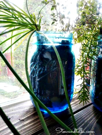 Herbs in a jar-StowandTellU