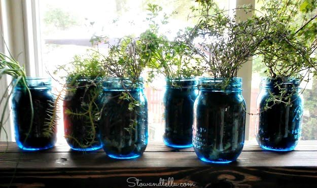 Herbs in a jar-StowandTellU
