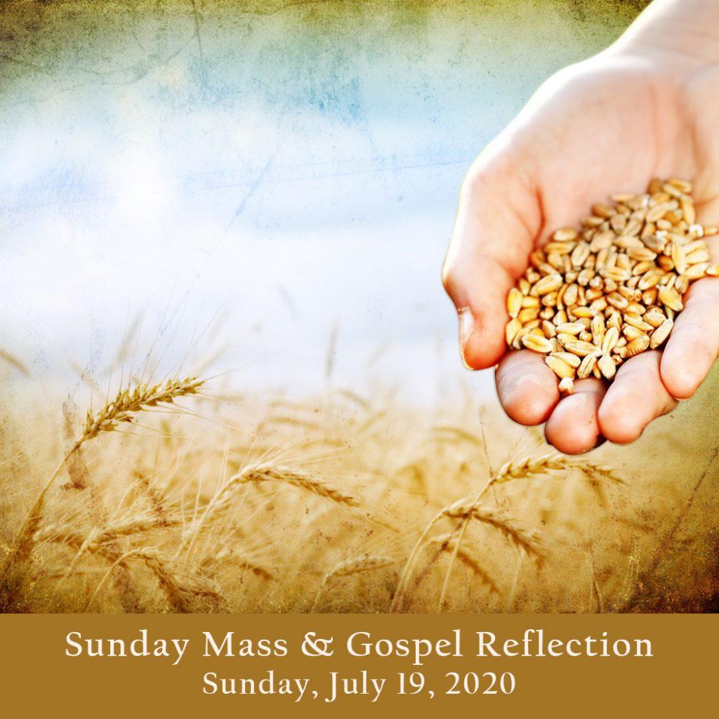 Sunday Mass And Gospel Reflection Sunday July 19