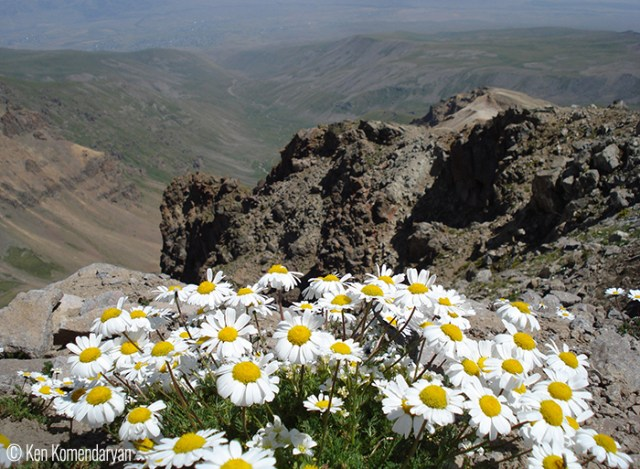© Ken Komendaryan (Yerevan, Armenia). The flowers and the stones –Mount Aragats The photo is taken at the Southern peak of the mount at the elevation of about 3900 m.