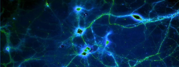 neuronssolarizedclarity