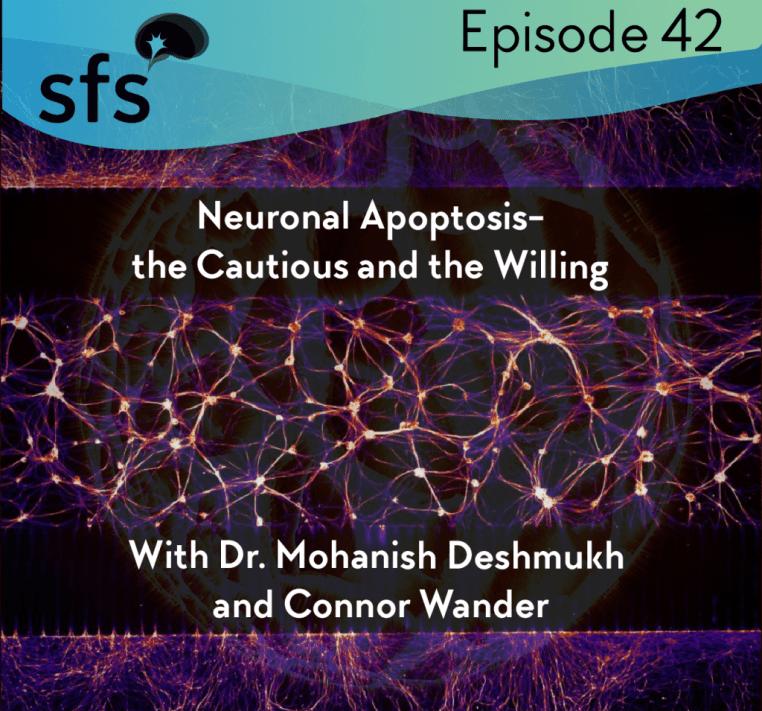 SFS Episode 24 Neuronal Apoptosis