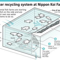 Building A Koi Pond Diagram Lincoln Sa 200 Welder Wiring Major Farms Switching To Food Fish Singapore News And Top