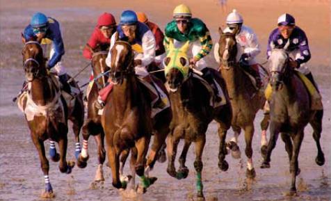 caballos2011c