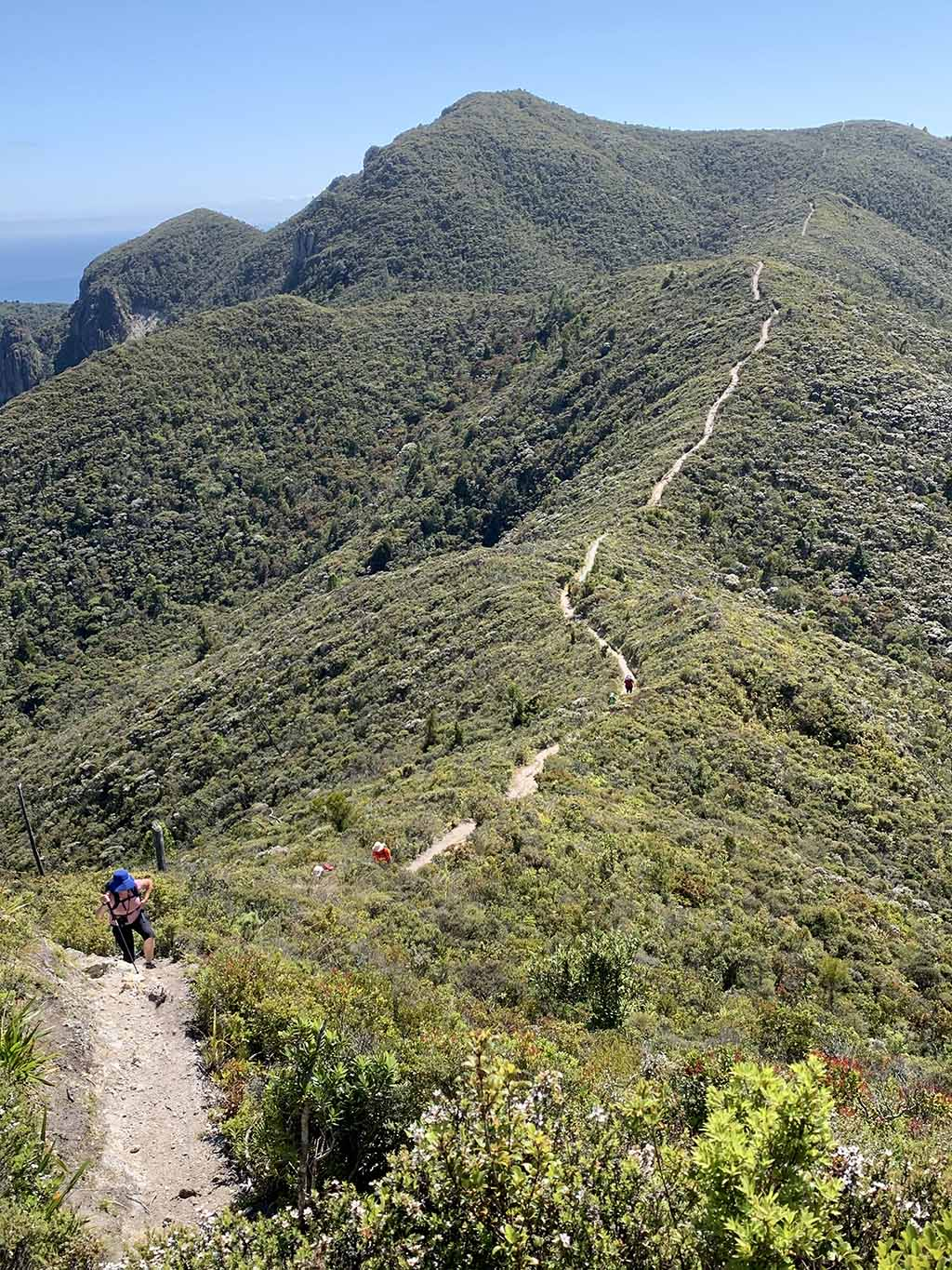 Climbing Mt Hobson on Great Barrier Island