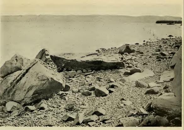 Lief's Rock 1928
