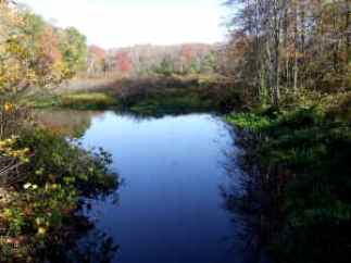 The River that winds through the Hokomock Swamp