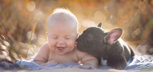 perros-y-bebes-725x345