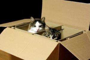 Lenny and Frankie enjoying a box.