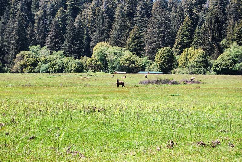 Narodni parki v ZDA Redwood