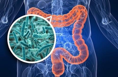 Microbiome/microbiota