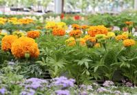 Patio Gardening - Stratford Garden Centre