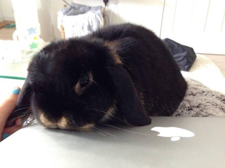 ATTENTION TRAVEL LOVERS!!: Panasonic Pet Monitoring Kit Review | UK Lifestyle Blog