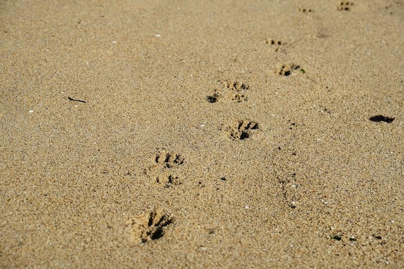 3 Tips For Dog Owners Leaving Lockdown | UK Lifestyle Blog