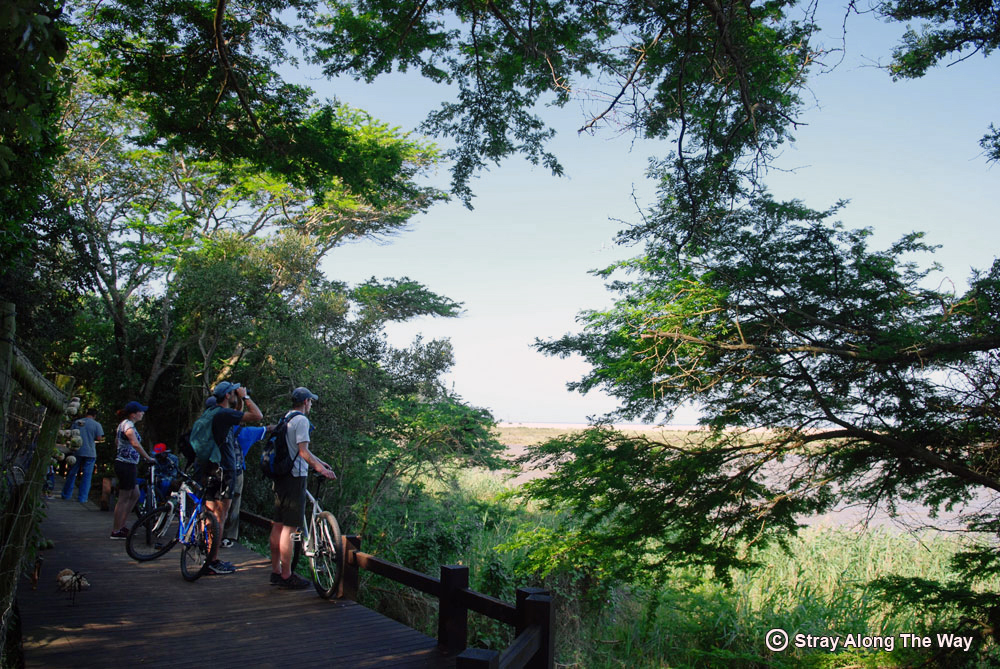 Cycle Tour of St Lucia and the iSimangaliso Wetland Park