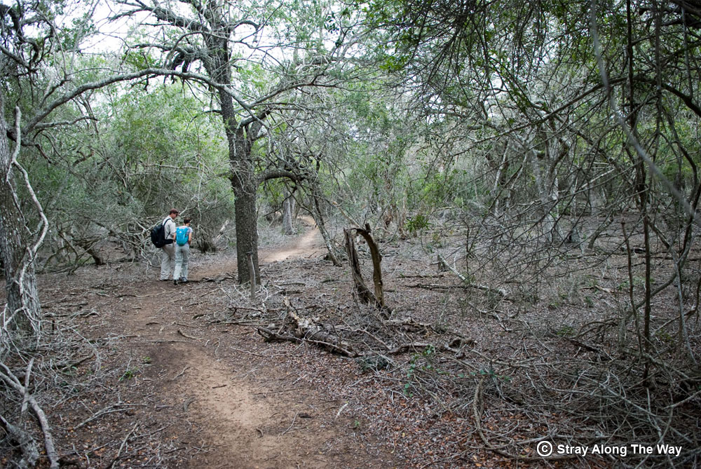 Jill on the Ingwe Trail at False Bay iSImangaliso