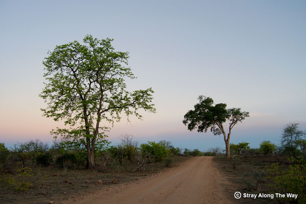 Kruger National Park dirt road