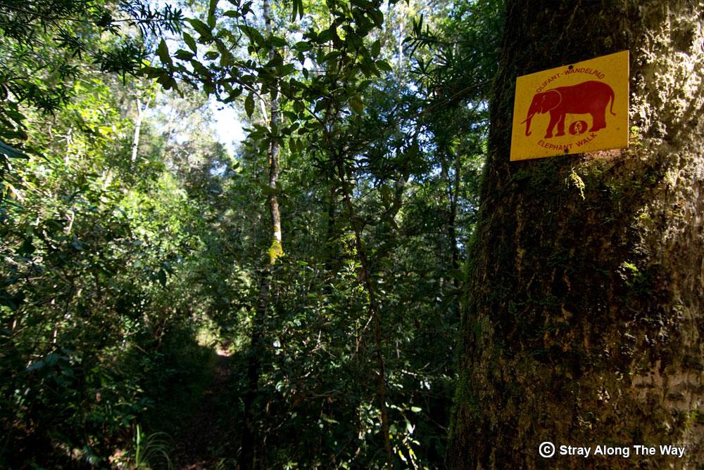 Knysna Elephant sign