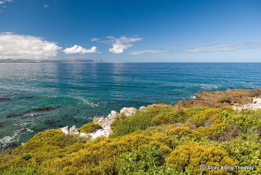 view-from-whale-trail-Hermanus-Overberg