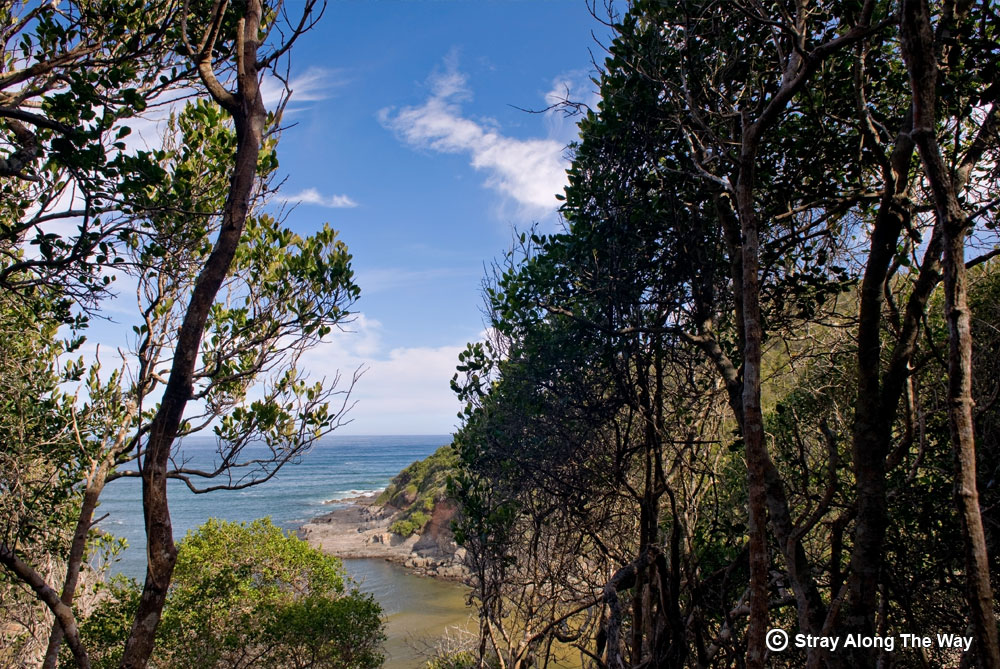 A view of the Salt River Mouth from the forest.