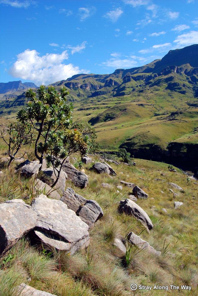 The epic backdrop of the uKhahlamba Drakensberg Mountains.