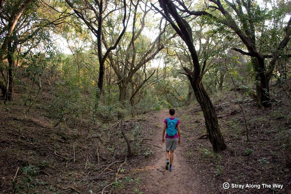Jill on the Siyaya Trail in the Umlalazi Nature Reserve.