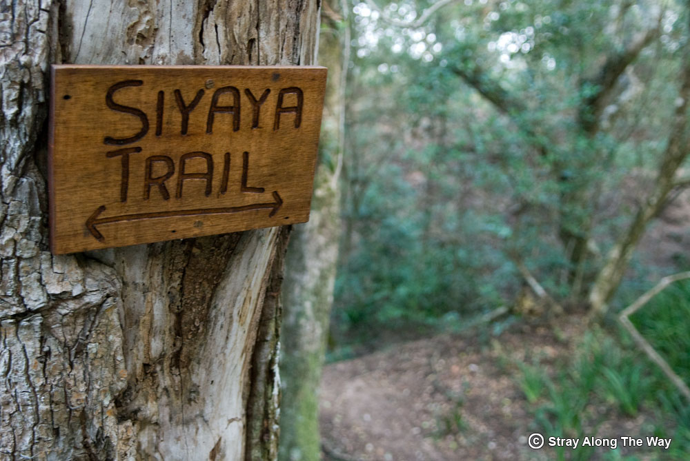 The Siyaya Trail in the Umlalazi Nature Reserve, Mtunzini.
