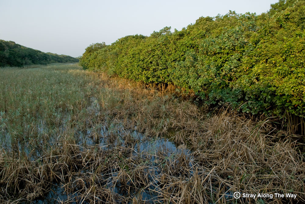The mangrove-fringed Siyaya River.