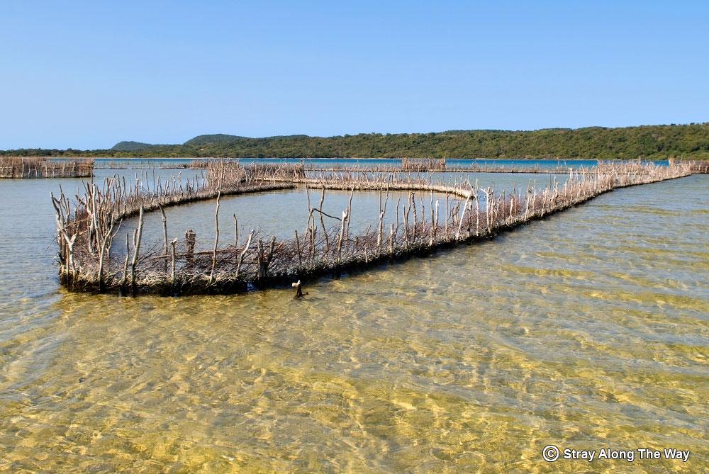 thonga fish traps kosi bay