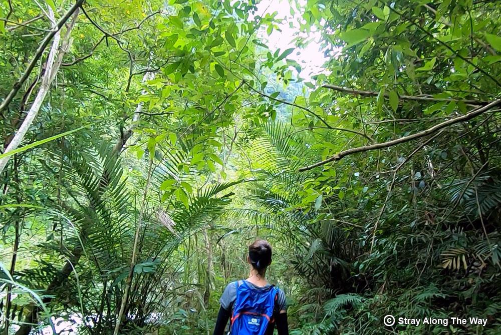 Jill cruising through the pristine jungle along the Sanzhan River banks.