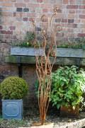 fern outside