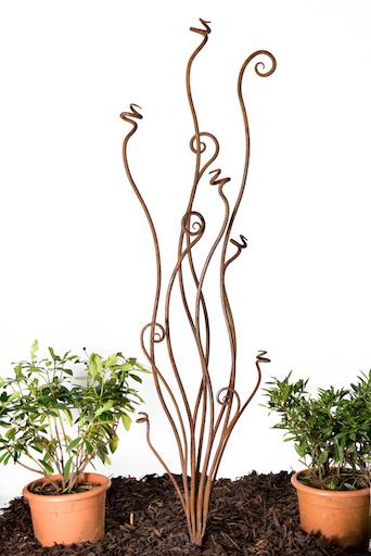 large fern2