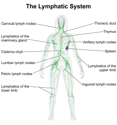 lymphatic system function [ 1600 x 1600 Pixel ]