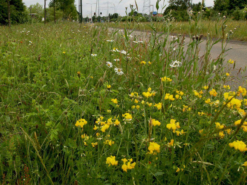 Heeft uw gemeente, waterschap of provincie bloemrijke bermen?