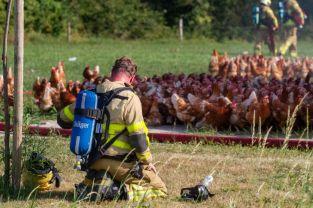 Brand kippenschuur Hemminksweg Beltrum
