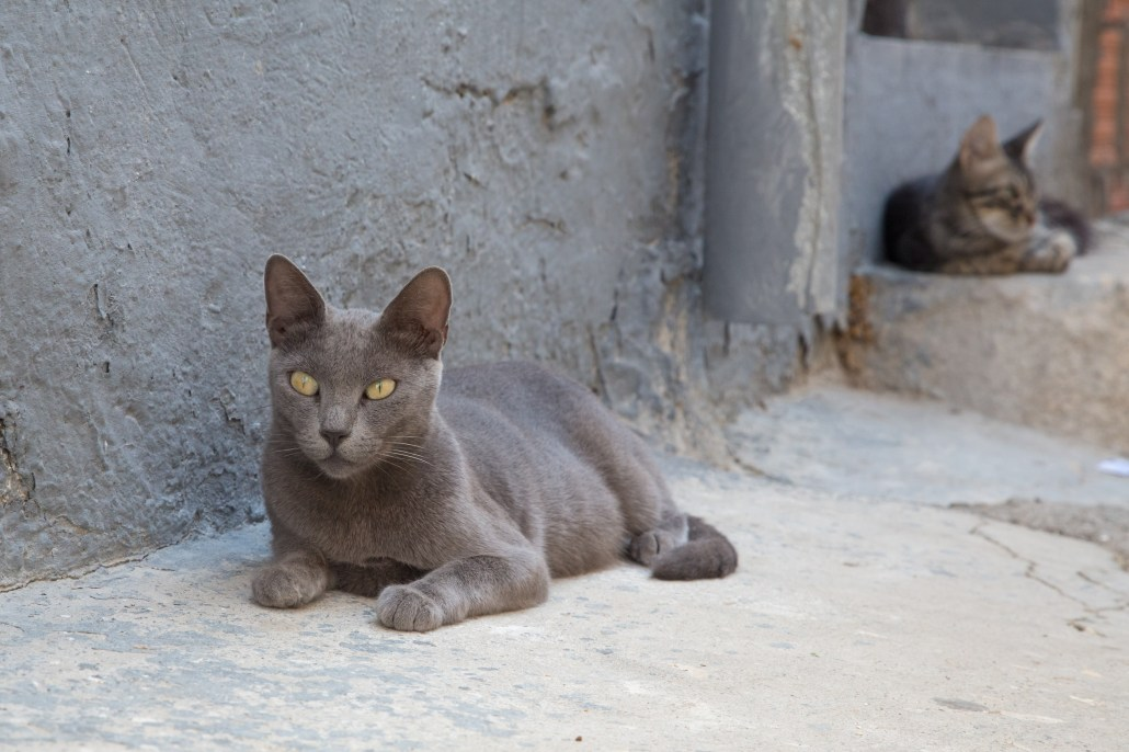 Tunisia cat. Cat is also the face of the Arab style.