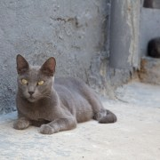 Tunisia cat