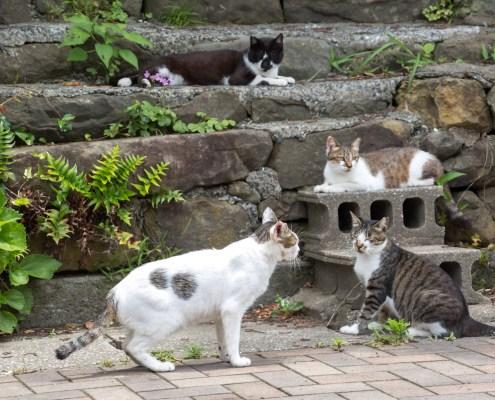 Cat at Ainoshima cat island Kikakyushu Kokura Fukuoka 6 4K 北九州小倉駅直結の船着き場から40分程度の所にある藍島。良質な漁場として釣り客を惹きつけると共に、手頃な「猫島」として猫ファンに人気。