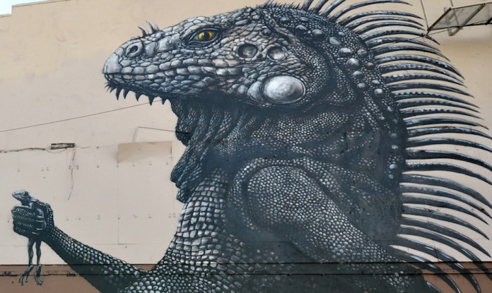 Street Art by ROA at Los Muros Hablan in San Juan, Puerto Rico 2